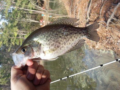 Jordan Lake Camping and Fishing