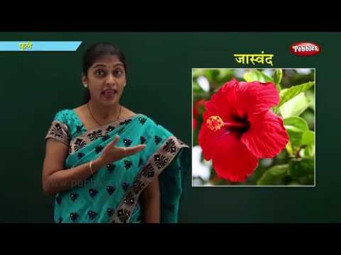 Flowers In Marathi Learn Marathi For Kids Marathi For Beginners Youtube