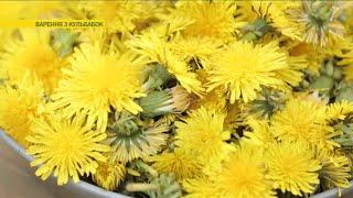 Как приготовить варенье из одуванчиков | Ранок з Україною