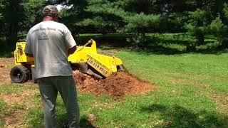 Economy Stump Removal - Serving Maryland.