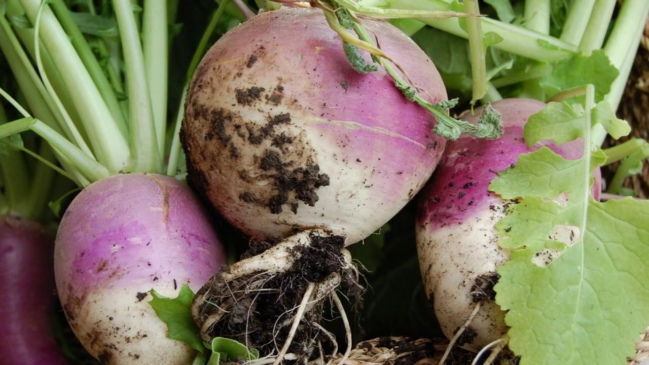 8 Amazing Turnips Benefits