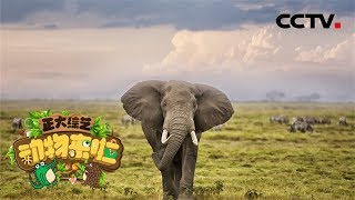 [正大综艺·动物来啦]选择题:大象往身上扬沙的好处是?| CCTV