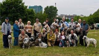Межрегиональная 116-я Московская выставка собак охотничьих пород. Награждение победителей выставки.