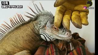 수년을 키워온 동물때문에 벌금이 나온다니 공룡을 주고가…