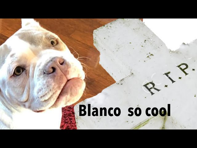 R.I.P BLANCO🙏🏼 Cj so cool