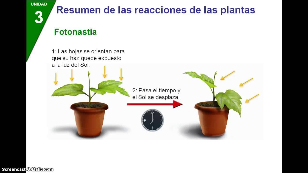 Funcion de relacion en las plantas youtube for Funcion de las plantas ornamentales