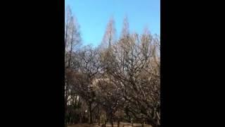 沢田研二が歌った、萩原健一主演のTV時代劇「風の中のあいつ」(1973年放...