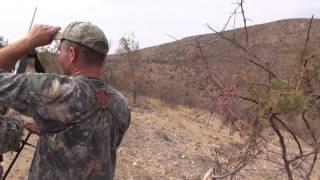 Zebra Hunting Namibia