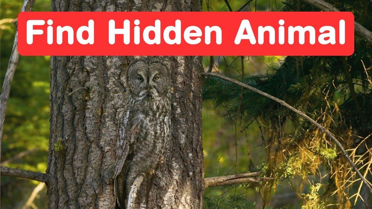 Find The Hidden Animals Genius Eyes Challenge Optical Illusion