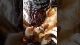 Pooch Needs More Attention || ViralHog