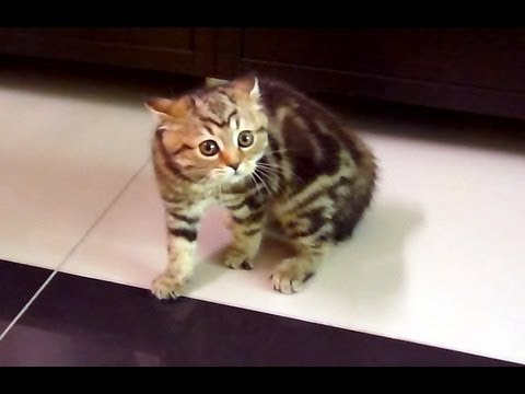 Funny Cats ballet | Scary Cute Kitten dancing