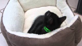 Myths on black cats