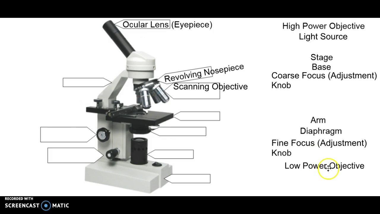 Microscope Labeling Youtube