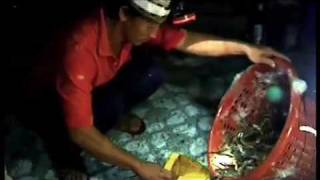 Farming Wastelands - Shrimp Farming