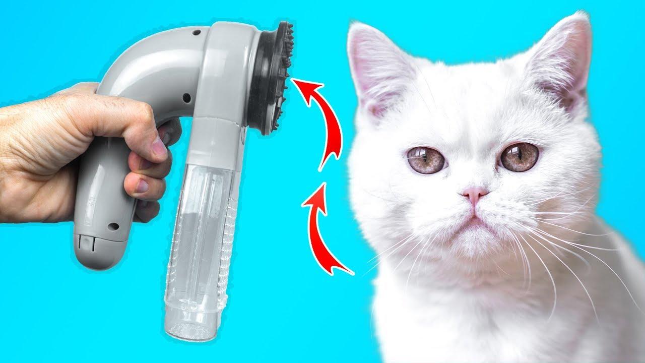 12 เครื่องมือและของเล่นที่แมวของคุณต้องการในตอนนี้