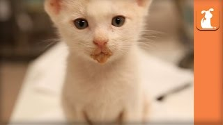 Tiny Kitty Eats Solid Food For First Time - Kitten Love