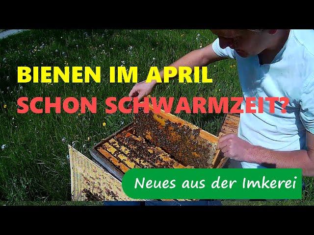 Bienen im April 2020 - Was ist zu tun? Schon Schwarmzeit?- Neues aus der Imkerei