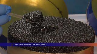 Yvelines | Du caviar dans les Yvelines!