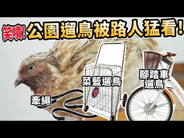 公園遛鳥俠!遛鳥被路人猛看!菜籃、牽繩、腳踏車遛鳥!【許伯簡芝】
