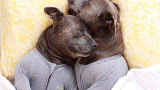 """インスタで話題の""""パジャマ犬""""がめっちゃかわいい♡~Pajamas dog~ 【チ..."""