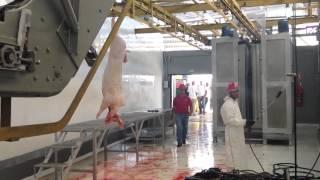 remodelacion y automatizacion matadero industrial Guigue