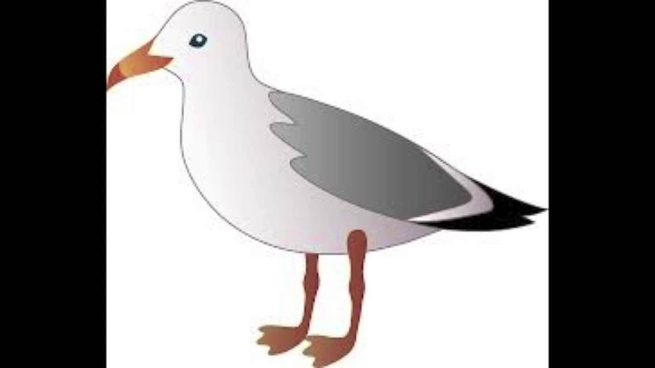 Drawing Lines Sound Effect : Seagull sound effect hd youtube
