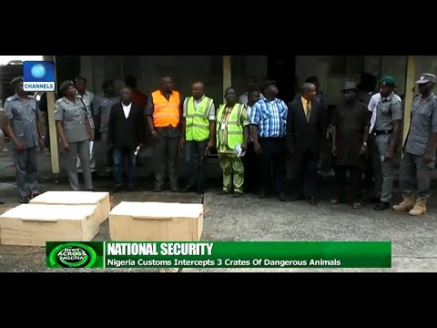 Nigerian Customs Nab Smugglers Of Dangerous Animals