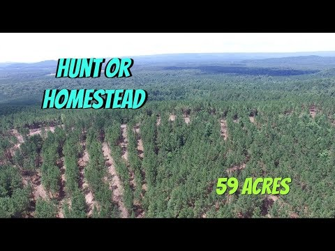 Alabama Land For Sale   59 Acres For Sale Hunting And Home Site