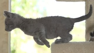 Kittens Playing in Slow Motion