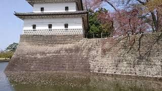 新発田城址公園のお堀で花イカダ。
