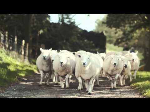 We're here for you – promoting British food and farming.