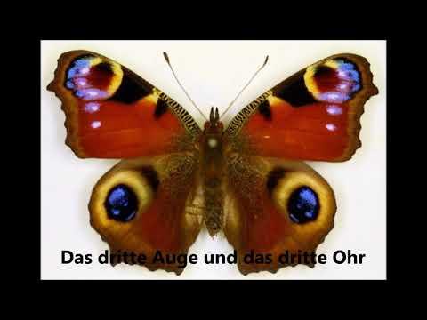 Hellmut Wolff  Das dritte Auge und das dritte Ohr