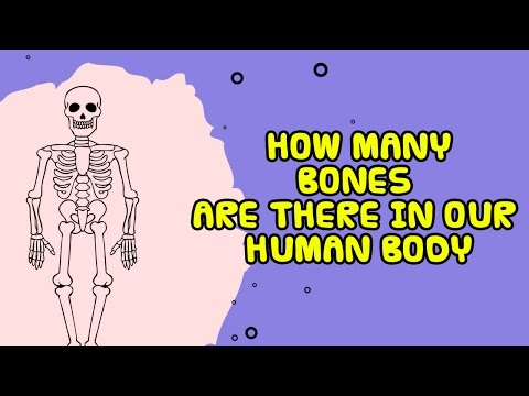Interesting Fact About Human Body
