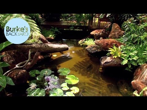 Burke's Backyard, Water Garden In The Tropics
