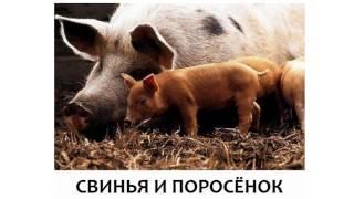 Животные и их дети Мамы и малыши Развивалки для детей Домана