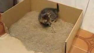 Cat potty training gone wrong!