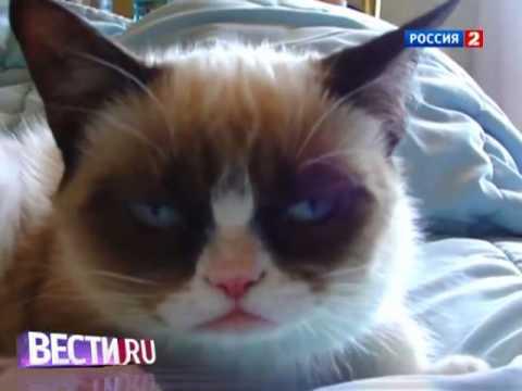 Сердитый кот продолжил карьеру звезды