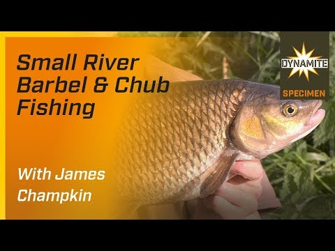 Barbel Fishing - Targeting Small Rivers With James Champkin