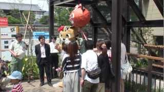 ツシマヤマネコ命名式 京都市動物園 ツシマヤマネコ 検索動画 22