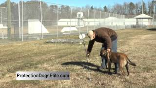 Protection Dog Glossary - Flex Pole