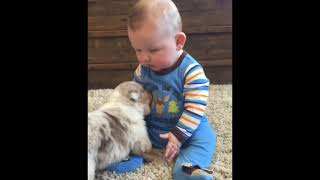 Who is more funny? Babies, Dogs or Cats?
