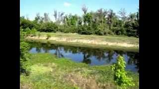 № 168 США Природа Флориды Река птицы Сказка Орландо