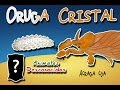 Oruga Cristal |De Joven Brillante Y De Adulto A Impresionante| (Animales Del Mundo) |Minidocumental|