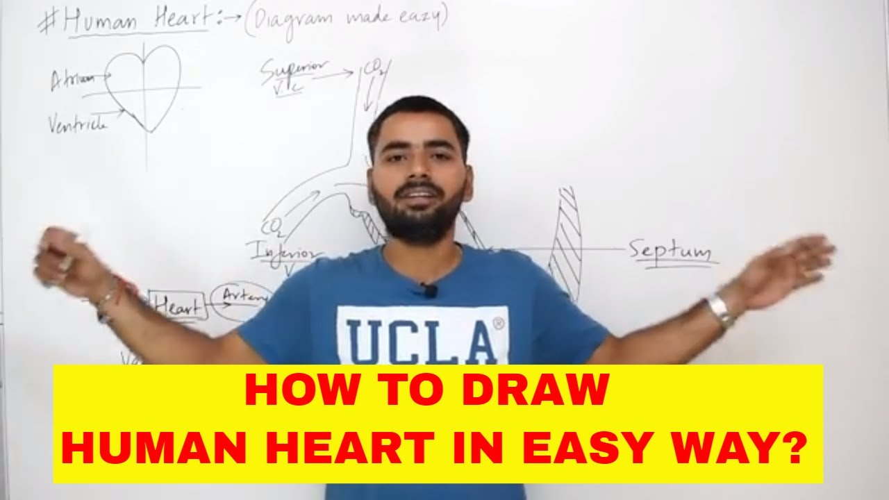 How To Draw Human Heart Easily Class 10 Youtube
