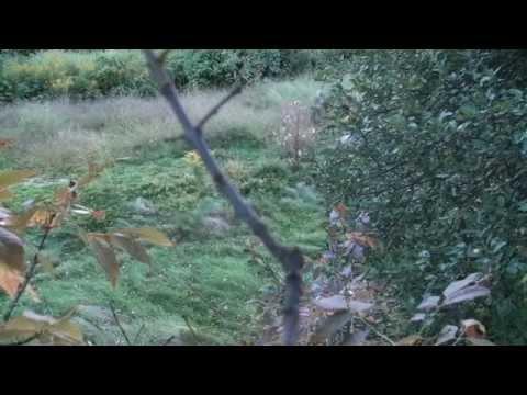 Opening Day NH Archery Season: Velvet Buck Kill