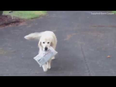 Dog collects newspaper for owners until the day he dies
