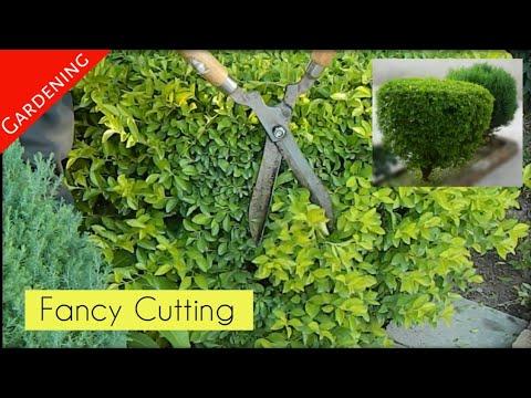 Baar k pode ki fancy cutting || Gardening & Others