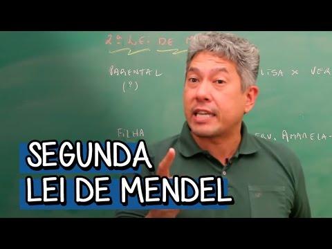SEGUNDA LEI DE MENDEL | BIOLOGIA | DESCOMPLICA