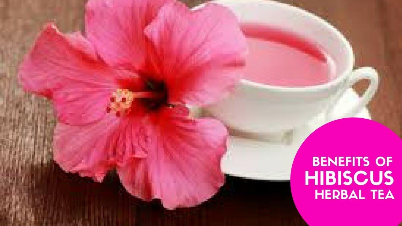 Health Benefits Of Hibiscus Tea Top 10 Benefits Uses Of Hibiscus