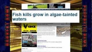 shocking 100 000 dead fish washed up baltimore chesapeake bay may 2012 prediction